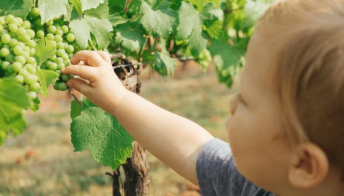 What are Montessori Sensitive Periods of Child Development?
