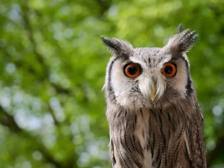 Owl Unit For Preschoolers Owls Crafts Amp Owl Books