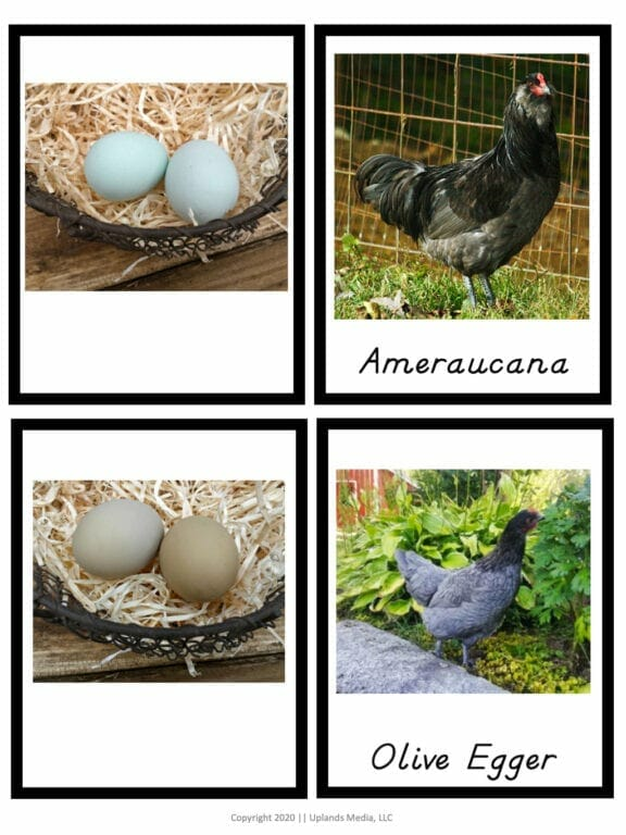 chicken to egg matching activity